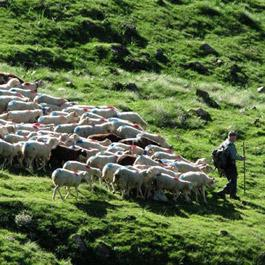 Pastoralism and transhumance